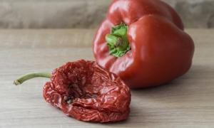 Tích trữ thực phẩm mùa dịch Covid: Thấy 1 trong những dấu hiệu sau phải bỏ đi ngay, kẻo rước bệnh vào người