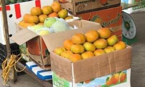 Hồng giòn bán tràn ngập chợ: 'Khách mua hồng Trung Quốc nhiều'