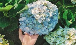 Mẹ bầu phải tránh xa ngay 3 loại hoa quen thuộc này nếu không muốn thai nhi bị dị tật