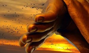 Giới hạn tham lam phá hỏng hạnh phúc, làm hại chính mình, bước qua được thì tha hồ hưởng phúc