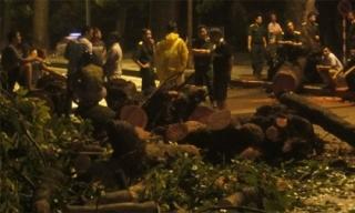 Hà Nội: Mưa lớn, cây xà cừ cổ thụ trên đường Hoàng Diệu gãy đổ, chắn ngang đường