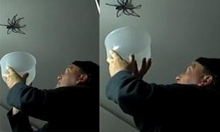Khoảnh khắc hài hước khi người đàn ông cố bắt chú nhện