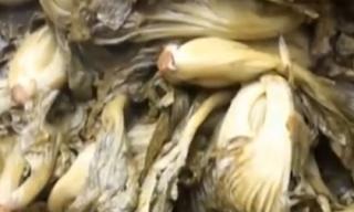 Dưa cải chứa vàng ô kịch độc tái xuất trên thị trường