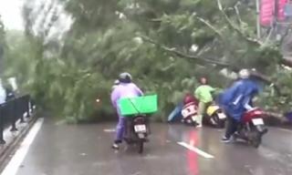 Clip cây đổ đè nhiều người trên phố trong mưa bão