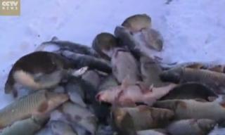 Video: Bắt cá trên mặt hồ đóng băng ở Trung Quốc