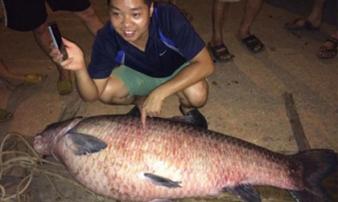 Bắt được cá trắm 'khủng' 61kg ở hồ Núi Cốc