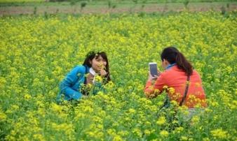 Chùm ảnh: Giới trẻ phát cuồng với thiên đường hoa cải nở rộ ở Thái Bình