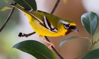 Đi dọc chiều dài đất nước để ngắm nhìn những chú chim đẹp và quý hiếm nhất Việt Nam