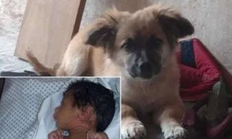 Chú chó cứu mạng bé sơ sinh 28 ngày tuổi bị bỏ rơi trong túi nilon