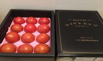 Cà chua Hoàng gia Nhật 1,6 triệu/kg nhà giàu Việt vẫn vét túi mua, khi ăn thử thì ngỡ ngàng