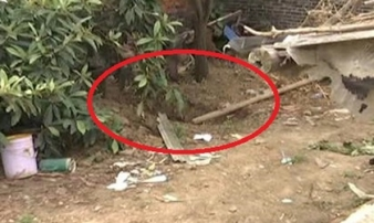 Gã đàn ông giết vợ, chôn xác trong vườn nhà suốt 5 năm mới bị phát hiện