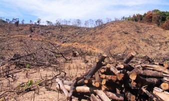 Hiện trường tan hoang nơi 34ha rừng tự nhiên bị xóa sổ