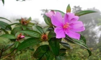 9 loại cây giải độc khi bị rắn cắn, côn trùng đốt, ngộ độc thực phẩm…