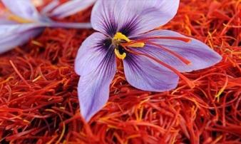 Nhụy hoa nghệ tây ngoài công dụng 'thần dược' còn có gì đặc biệt mà đắt hơn vàng?