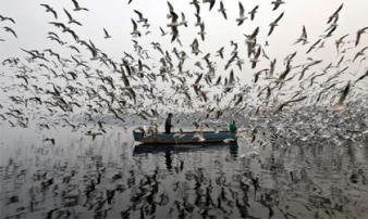 Những bức ảnh ấn tượng nhất năm 2017 được tờ Reuters bình chọn