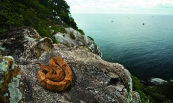 Tim đập chân run khám phá hòn đảo toàn rắn độc