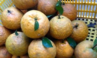 Chỉ mặt loại quả tẩm nhiều chất độc hại nhất hiện nay nhưng rất nhiều người đang chuộng dùng