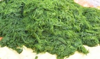 Ở Tây Bắc, người ta biến rêu thành đặc sản thơm ngon