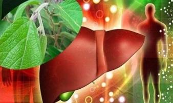Được đồn thổi là loại cây có tác dụng thần kì chữa bệnh gan và ung thư gan: Chuyên gia khẳng định đó là thông tin đánh lừa người bệnh