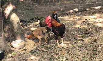 Vụ anh đập chết em trai và hàng xóm vì 2 con gà: Nghi phạm có biểu hiện tâm thần gần 30 năm nay