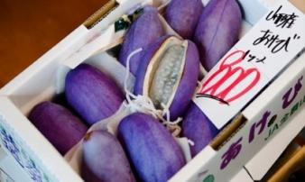 Nho Nhật siêu đắt 300.000 đồng/quả bán tại Việt Nam có gì đặc biệt?