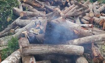 Kiểm tra gỗ lậu, cán bộ kiểm lâm bị tưới xăng đốt