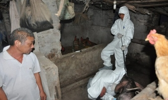 Ứng phó dịch tả lợn châu Phi: Chặn dịch xuyên đêm, không ngày nghỉ