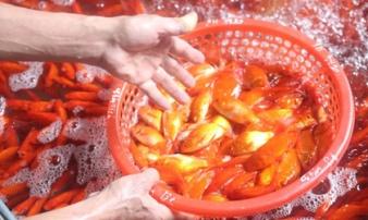 Chợ cá lớn nhất thủ đô đỏ rực trước ngày lễ ông Công ông Táo