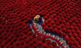 Dân mạng xứ Trung trầm trồ khen ngợi bộ ảnh 'Cánh đồng hương Việt Nam'