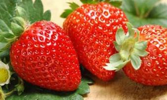 6 loại trái cây giàu vitamin C rất tốt cho mẹ bầu trong mùa đông