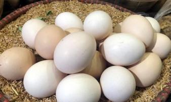 Giải mã hiện tượng trứng gà tăng giá kỷ lục, thương lái tranh nhau mua giữa tâm dịch