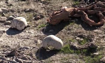 Kinh hãi mộ tập thể chôn hơn 120 nạn nhân của IS ở Sinjar, Iraq