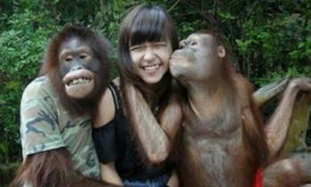Chào năm Thân, anh em Khỉ đến rồi đây