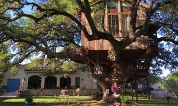 Vì sao ngôi nhà trên cây 450 tuổi, bé như 'tổ chim' lại khiến nhiều người mê mẩn?