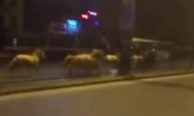 Hà Nội: Choáng với clip đàn ngựa trắng phi nước đại trên đường Giải Phóng