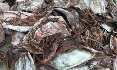 Bắt giữ hơn 21 tấn mực khô bốc mùi hôi thối trên đường ra Bắc Ninh tiêu thụ
