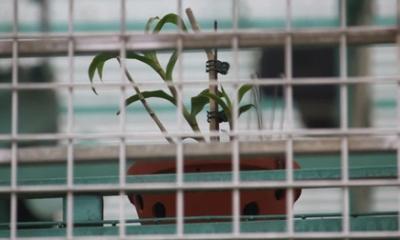 Người nhà lên tiếng sau khi chủ vườn lan đột biến ở Hà Nội bị tố ôm hàng trăm tỷ bỏ trốn: 'Anh ấy cũng là nạn nhân'