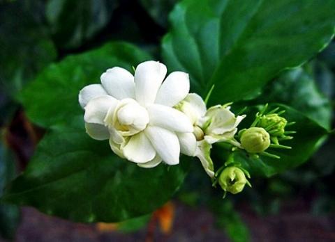 nhung loi ich nay khien hoa nhai la bai thuoc quy - 1