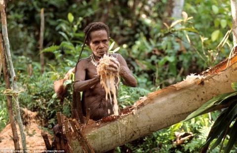 Sức sống phi thường của bộ lạc sống trong những ngôi nhà trên cây cao tới 50m, tách biệt với loài người - Ảnh 3.