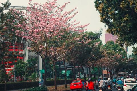 Không ngờ giữa Sài Gòn lại có những con đường hoa đẹp đến thế này! - 3
