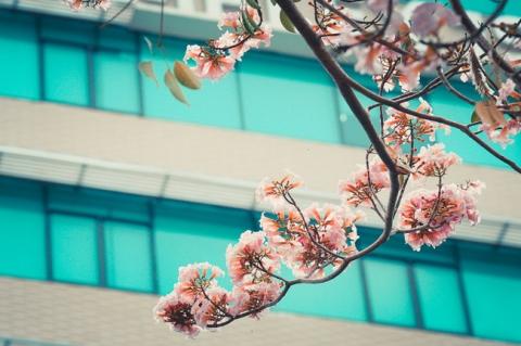 Không ngờ giữa Sài Gòn lại có những con đường hoa đẹp đến thế này! - 6