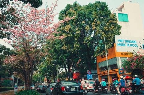 Không ngờ giữa Sài Gòn lại có những con đường hoa đẹp đến thế này! - 5