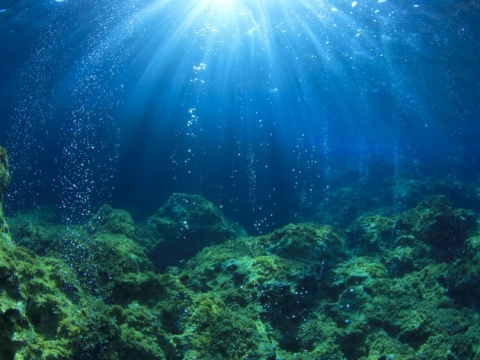 Lạc xuống thủy cung với loạt ảnh đại dương đẹp ngỡ ngàng - 1