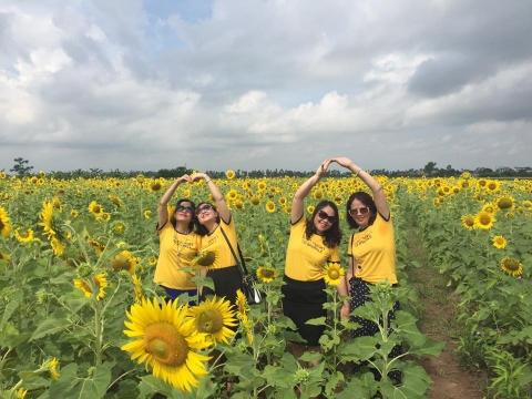 Cánh đồng hoa hướng dương ở Thái Bình hút khách những ngày đầu hè - 6
