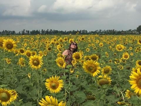 Cánh đồng hoa hướng dương ở Thái Bình hút khách những ngày đầu hè - 7