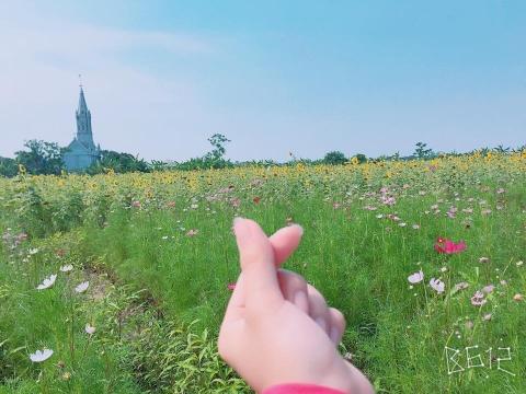 Cánh đồng hoa hướng dương ở Thái Bình hút khách những ngày đầu hè - 10