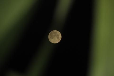 """Ảnh """"trăng máu"""" tại Việt Nam do nguyệt thực toàn phần rạng sáng 28/7 - 3"""