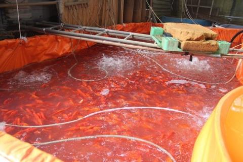 Chợ cá lớn nhất thủ đô đỏ rực trước ngày lễ ông Công ông Táo ảnh 7