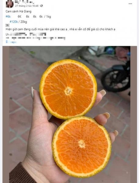 Hé lộ sự thật về cam sành Hà Giang 6k tràn lan khắp phố - 2