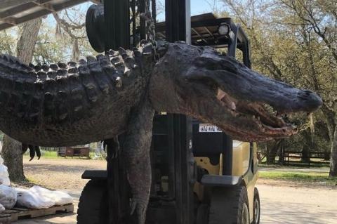 Mổ bụng con cá sấu dài gần 4m, người dân ngỡ ngàng khi bí mật hơn 20 năm trước được hé lộ - Ảnh 1.